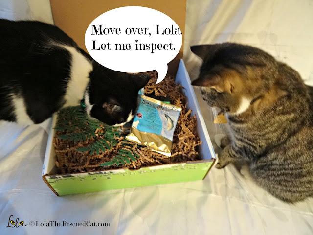 Addiction Pet Food|cat food reviews