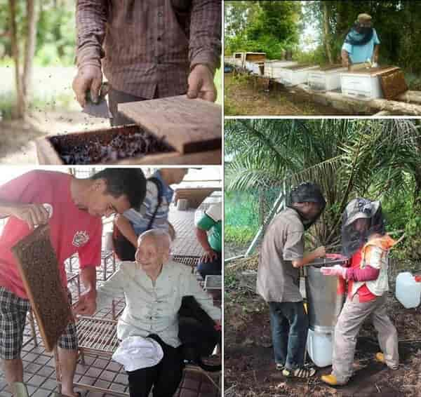 Nictar Bee pineapple farm -  monofloral honey