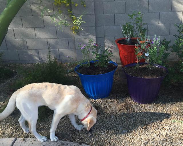 Ramblings from a desert garden easy garden project for Help me design my garden