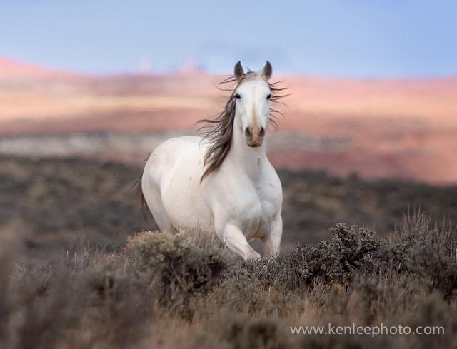 صور وخلفيات خيول 2018 رائعة بجودة عالية Pictures Of