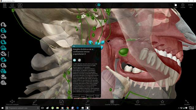 Human Anatomy Atlas 7 de Visible Body