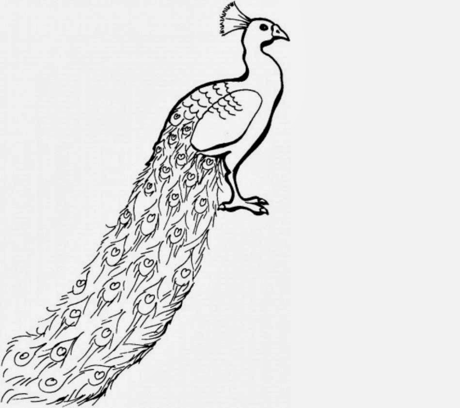 Coloring pages of peacocks - Free Peacock Coloring Pages