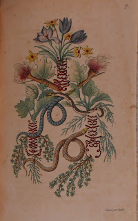 An emblem including snakes and botanical elements.