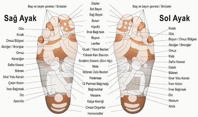Refleksoloji ve ayaktaki vücut bağlantıları