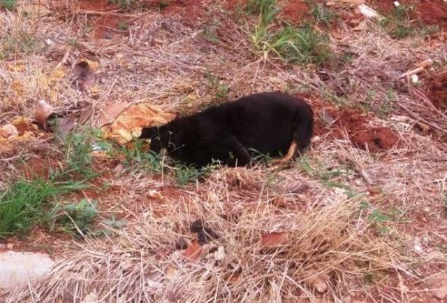 GOIOERÊ: Cachorros e gatos estão sendo mortos por envenenamento