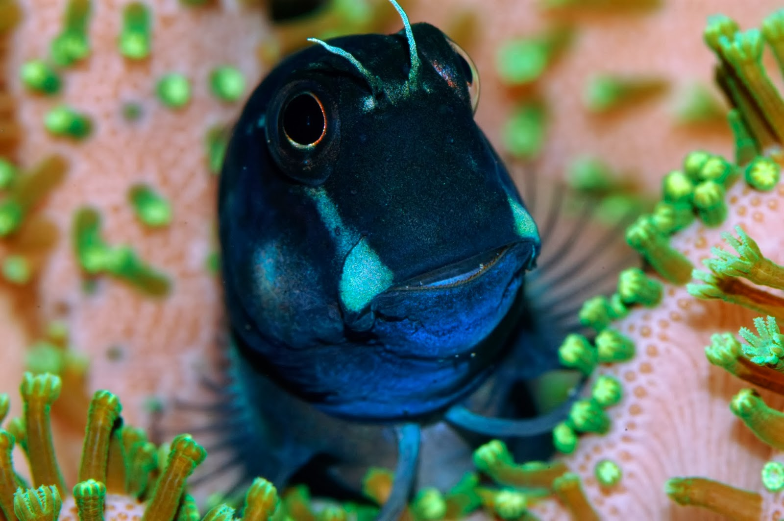 Nano Fish Small Size Big Personalities Marine Depot Blog