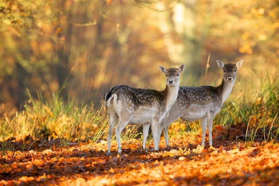 Phenomenal Wildlife Photography of Mark Bridger