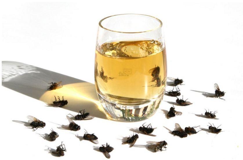 Comment se d barrasser des mouches rapidement l int rieur et l ext rieur bibuzz - Comment se debarrasser des araignees a l exterieur ...