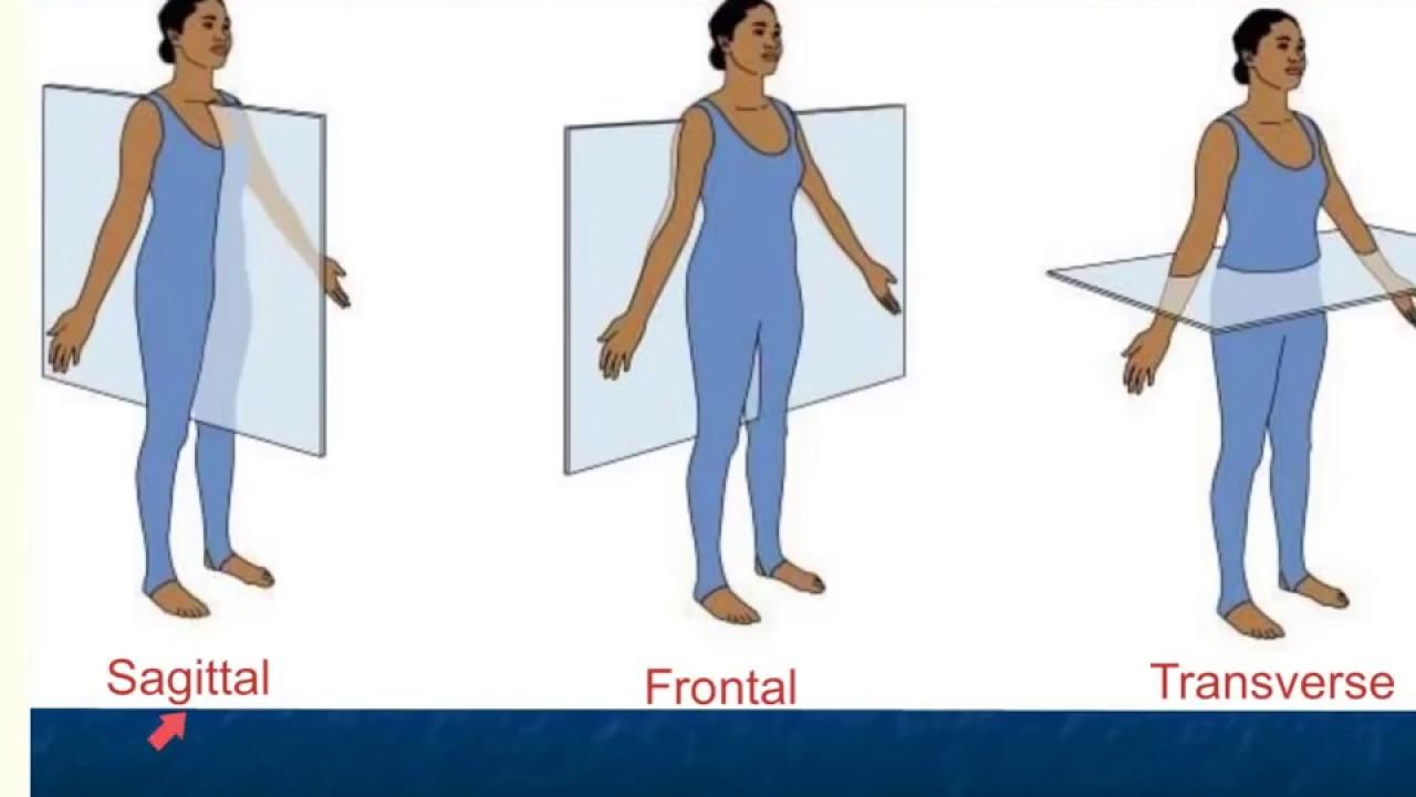Anatomy Mcqs General Introduction