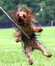 smešna slika ružnog psa