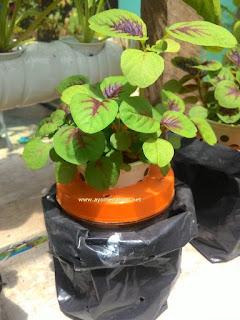 Jenis tanaman yang bisa dibudidayakan secara hidroponik