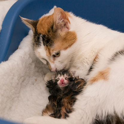 Cats Protection Bridgend Daisy and kitten