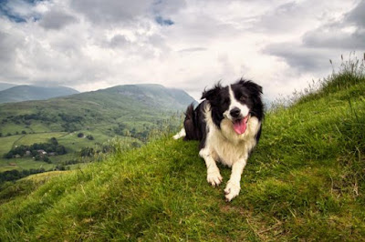 Are Border Collies the smartest Dogs