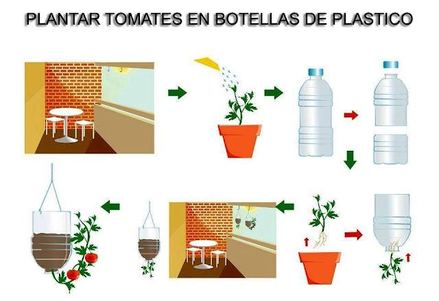 Plantar tomates en botellas de plástico