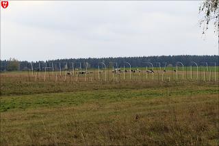 Деревня Бобовня. Стадо коров