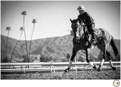 Horse racing, winning racing tips, betting tips,