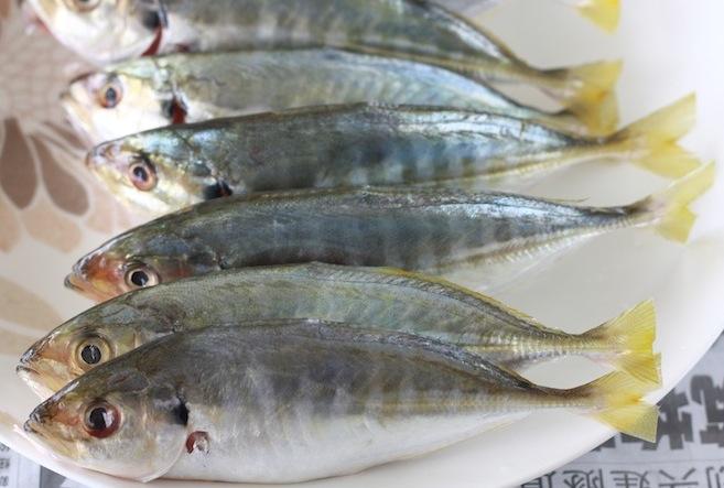 ikan pelata or yellowtail kingfish for asam laksa recipe