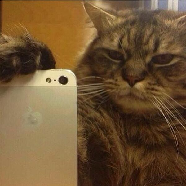 When Kitten Take Selfie