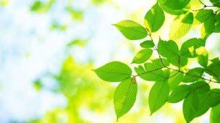 Faktor-Faktor yang Mempengaruhi Pertumbuhan Tanaman