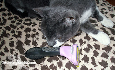 How to Bond With Your Cat Using the FURminator #ChewyInfluencer