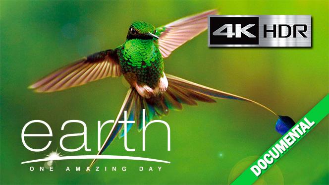 Un día Maravilloso en la Tierra (2017) 4K UHD [HDR] Subtitulado