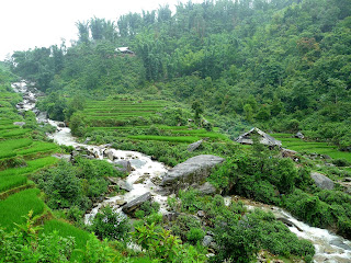 Sapa, Vietnam, rice paddy, rice terrace, rizière