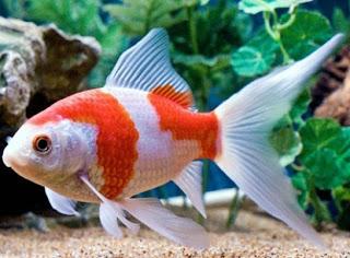 Cara Menghilangkan Bau Amis Pada Ikan Saat di Kulkas