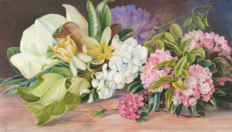 Marianne North Flowers of North American Trees and Shrubs.