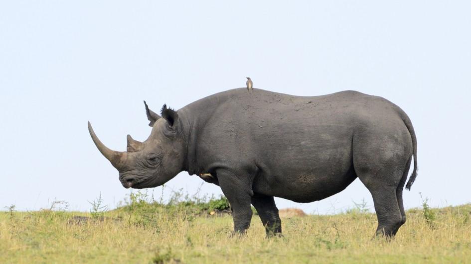 Rhinoceroses The Dangerous Animals Deadly Animals