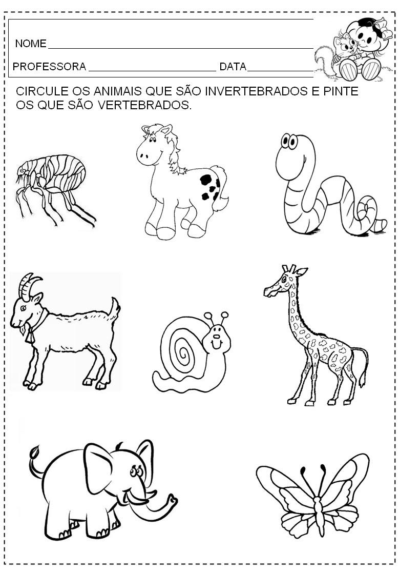 Animais Vertebrados Para Colorir Moda E Comunicacao