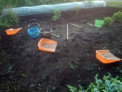 ジャガイモ掘り完了!