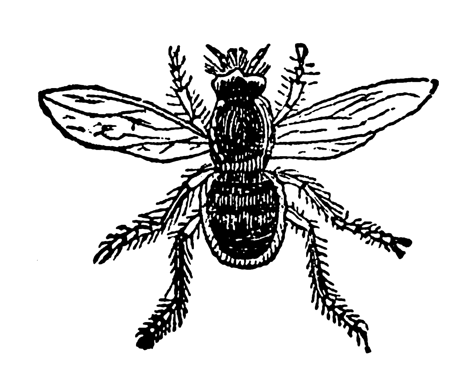 Digital Stamp Design Printable Insect Bee Fly Digital