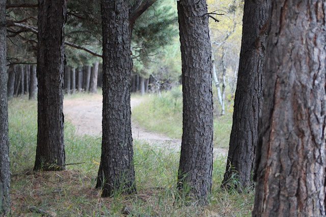 Spruce Woods Wildlife Refuge