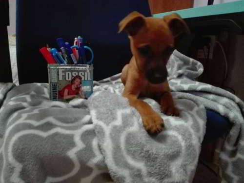 cachorra talla pequena mediana
