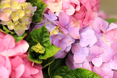 Pink and Purple Hydrangea Flowers by Mademoiselle Mermaid.