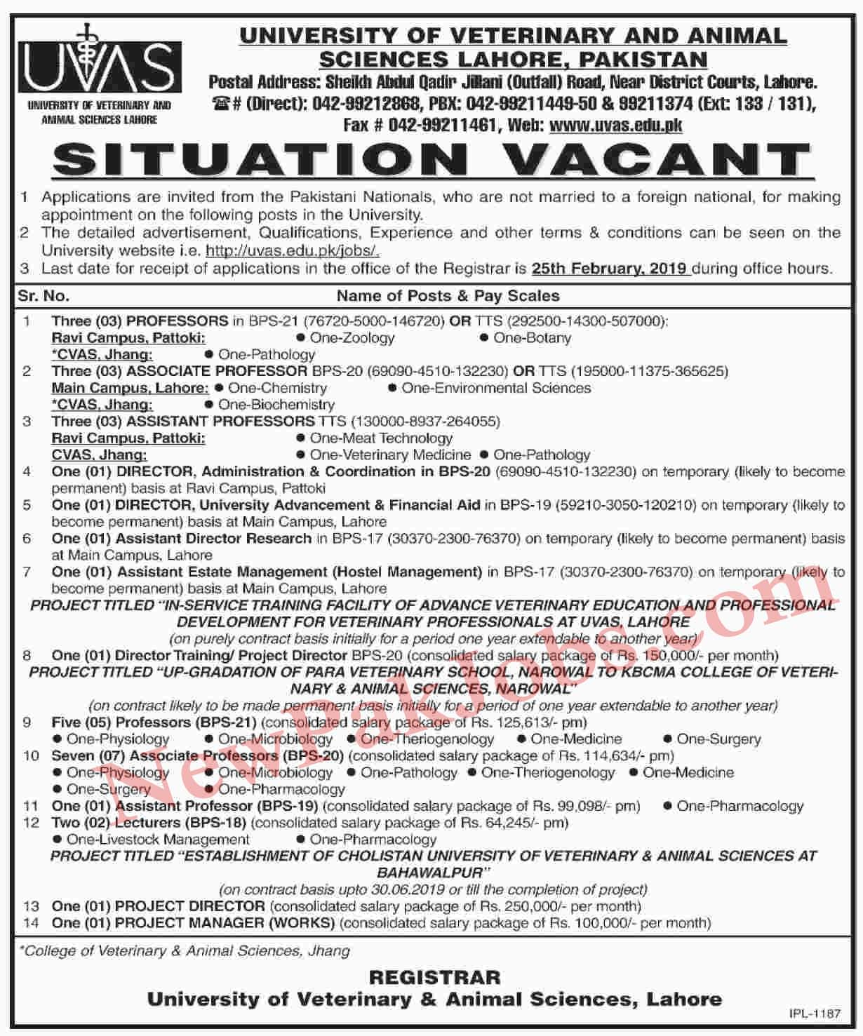UVAS Latest Teaching Jobs in Lahore 2019