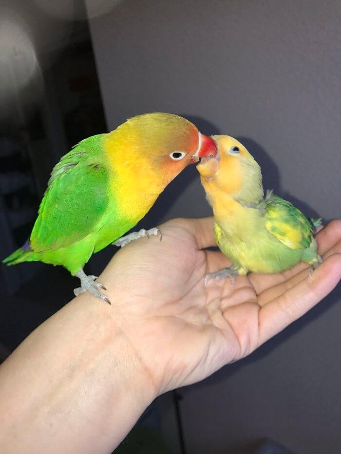 Kiwi And His Goth Girlfriend Had Four Babies, And Their Colorful Story Stole Our Hearts