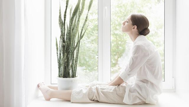 5 Manfaat Sehat Menyimpan Tanaman Hias di Dalam Ruangan