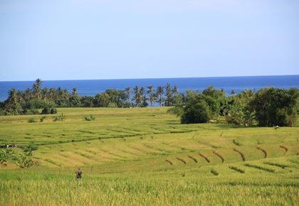 Tempat Wisata Bali Beraban Selemadeg Timur Tabanan