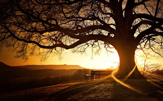 Tree Wallpaper Dekstop Tree Wallpaper Dekstop tree wallpaper from once upon a time