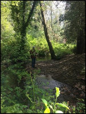 Berwick Creek near Chehalis with low stream flows. Improvement work will open up 3.3 new miles of fish habitat.