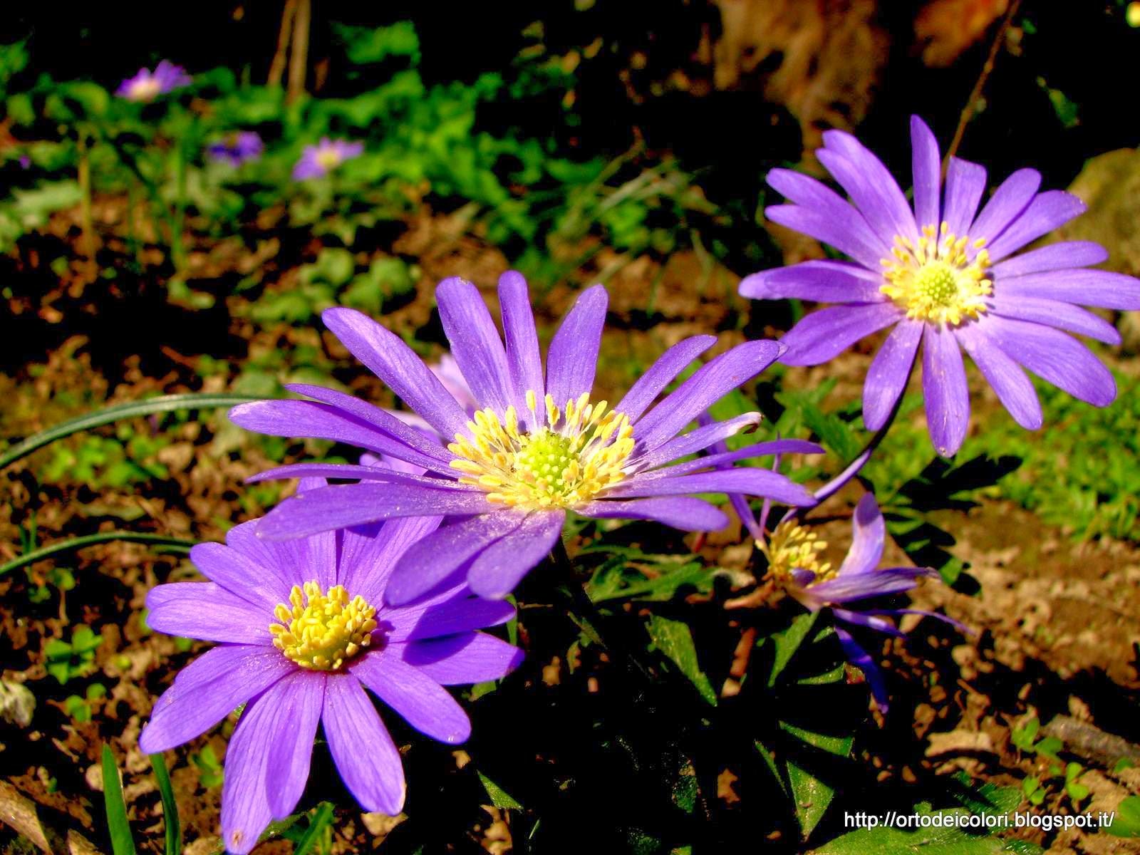 L 39 orto dei colori piccoli fiori del mattino e fiori con for Fiori con la l