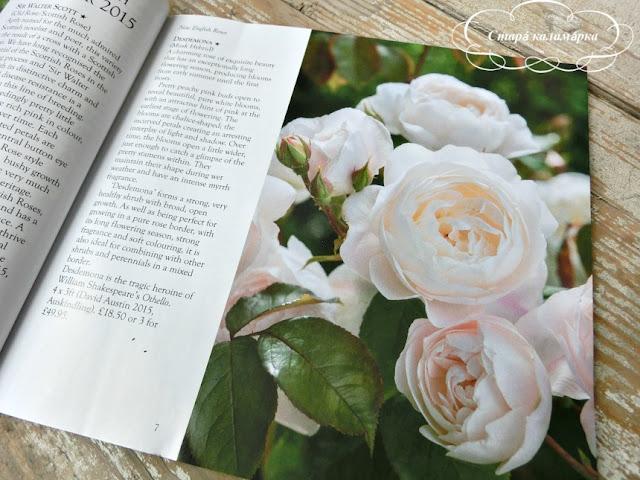 Розы Дэвида Остина / David Austin Roses