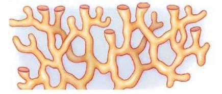 Retikulum endoplasma halus