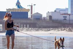 Dog Treats: Should You Use Them In Dog Training?