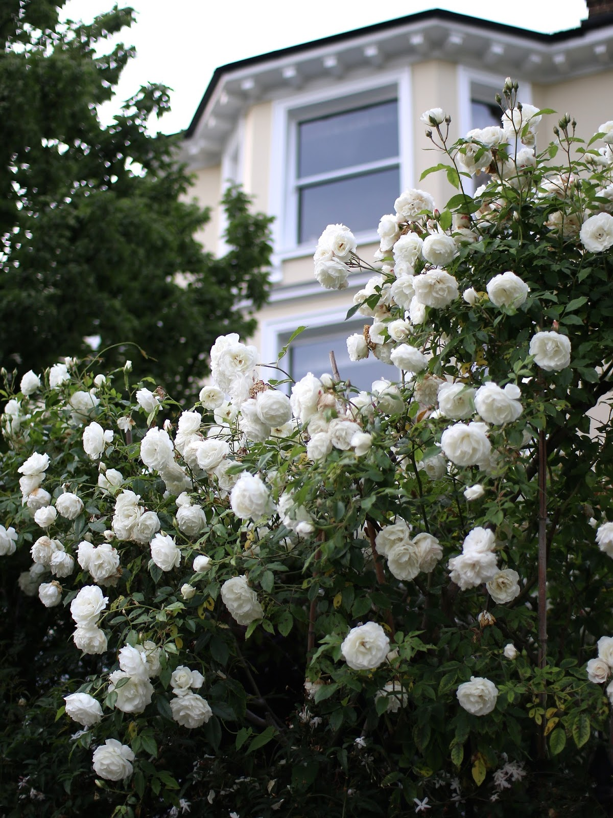 beautiful flowers in notting hill in the summer