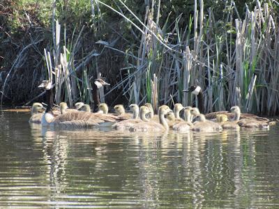 Tule Lake National Wildlife Refuge California