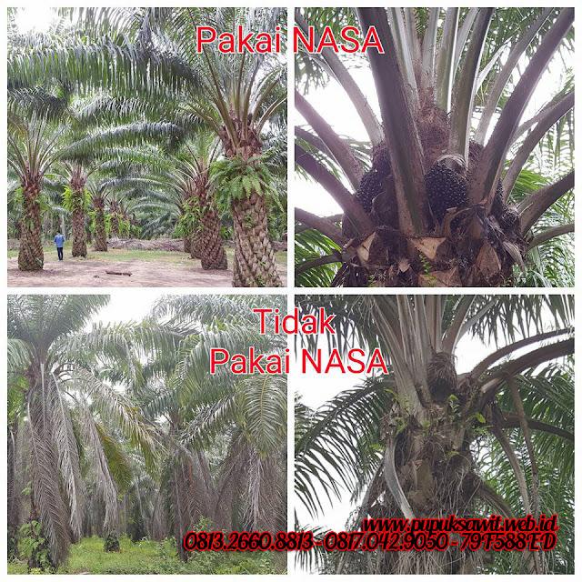 Testimoni produk Nasa di Lampung