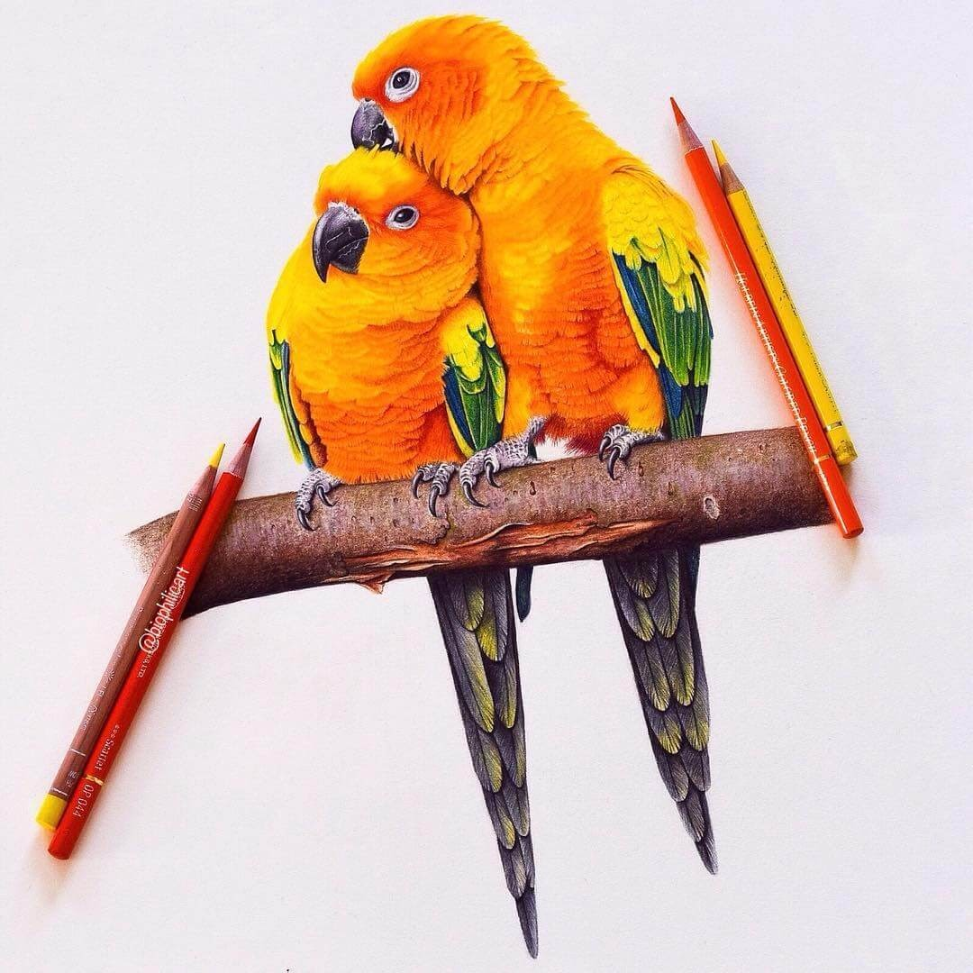 14-Sun-Conures-Sallyann-Brightly-Colored-Animal-Pencil-Drawings-www-designstack-co