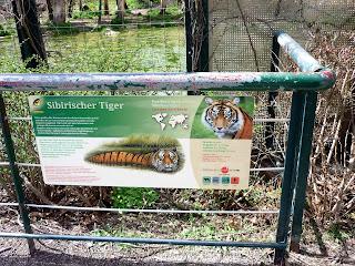 placuta cu informatii despre tigrul siberian